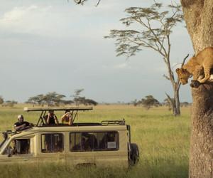 africa, wildlife, and amitrips image