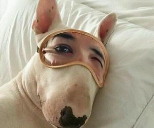 bea, funny, and dog image