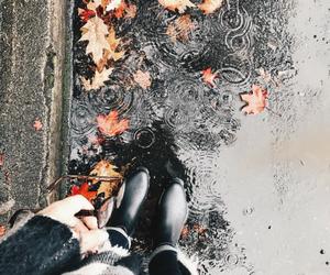 otoño image