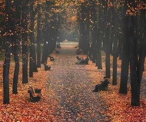 autumn, fall, and walk image