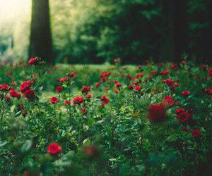 forest and roses image