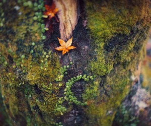 autumn, nature, and tree trunk image