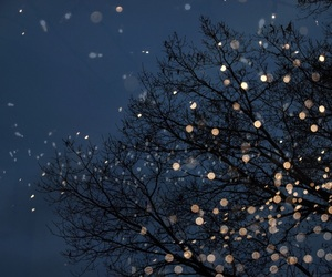 light, tree, and night image