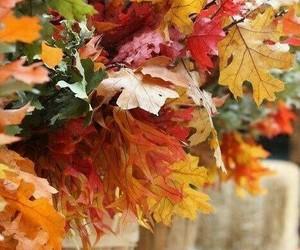 amber, autumn, and orange image