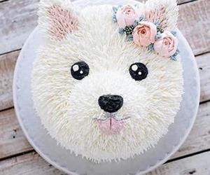 Cake Dog And Food Image