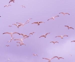 birds, purple, and sky image