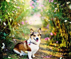 2009, dog, and flower image