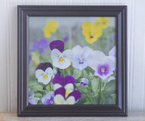 etsy, flower photography, and flower picture image