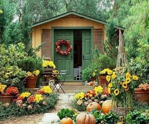 pumpkin, autumn, and garden image