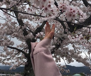 aesthetic and sakura image