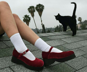 red, cat, and shoes image