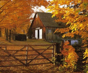 autumn, fall, and barn image