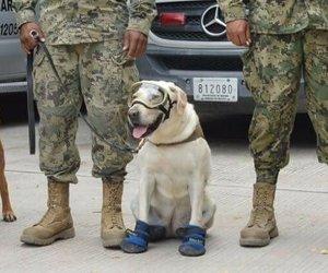 dog, eco, and terremoto image