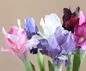 beautiful, flower, and iris image