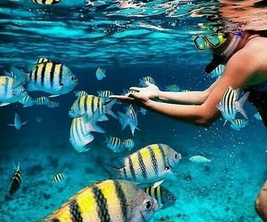 fish, summer, and ocean image