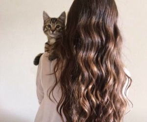 aesthetic, brown, and cat image