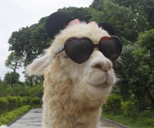 cool, llama, and relatable image