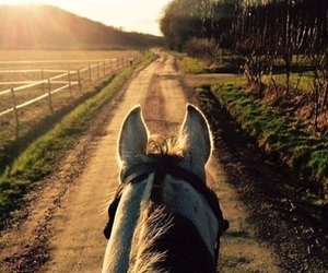horse, riding, and sun image