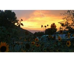 beautiful, lights, and sunflower image