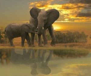 animal, elephants, and heaven image