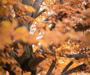 fall, tree, and love image