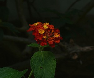 flor, flowers, and plant image