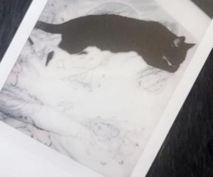 black, black vogue, and cat image