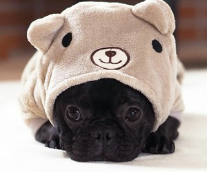 dog, cute, and adorable image