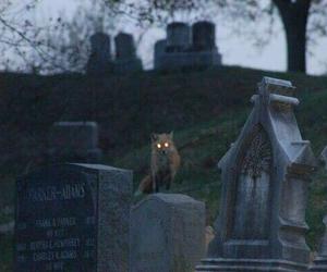 fox, dark, and cemetery image