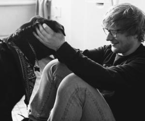 dog and ed sheeran image