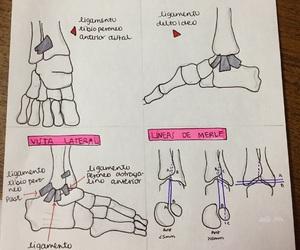 anatomia, anatomy, and bones image