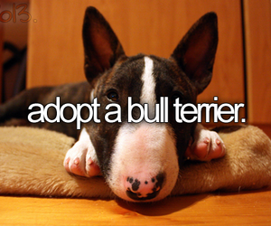 dog, before i die, and quote image
