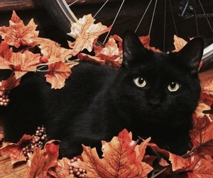 autumn, cat, and fall image