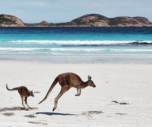 beach, kangaroo, and animals image