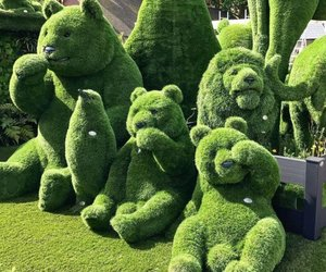 art, bears, and shrubs image