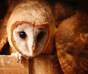 harry potter, hp, and owls image
