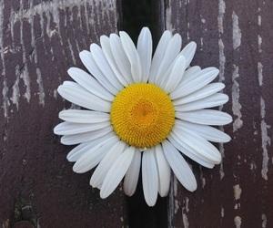 alternative, creative, and daisy image