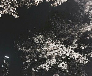 aesthetic, beauty, and cherry tree image
