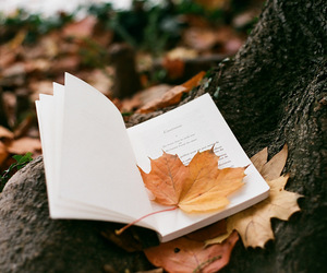 analog, autumn, and book image