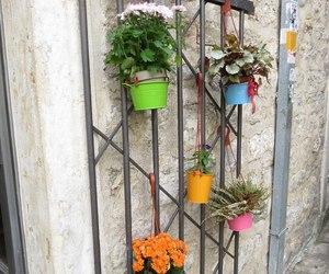 flower, budva, and Montenegro image