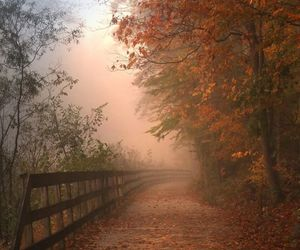 autumn, misty, and nature image