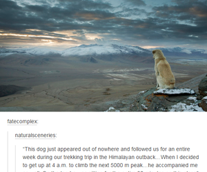 animal, dog, and tumblr image