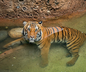 animals, canon 1dx, and big cats image
