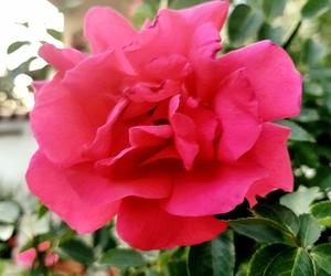 bulgaria, bg rose, and rose image