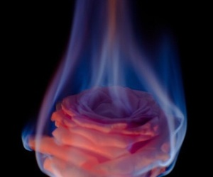 fire, rose, and wallpaper image