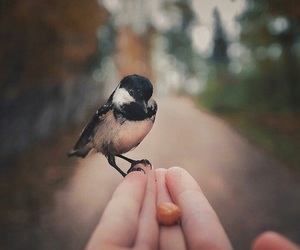 bird and beautiful image