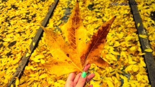autumn, golden, and leaves image