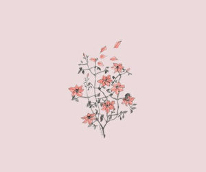 header, pink, and flowers image