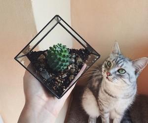 aquarium, cactus, and cat image