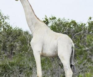 animals and giraffes image